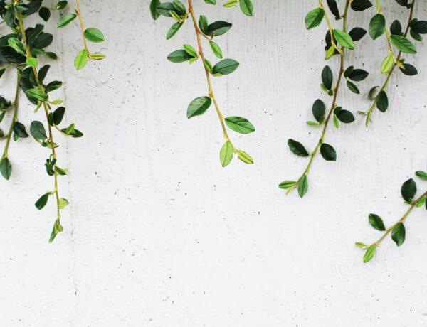 una pianta a foglie verdi