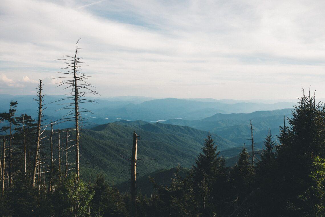 un bosco di pini dell'Appalachia